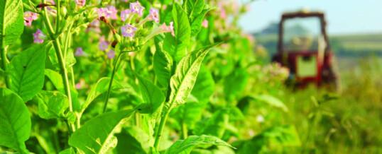 La Manifattura Tabacchi di Chiaravalle: l'orgoglio delle Marche