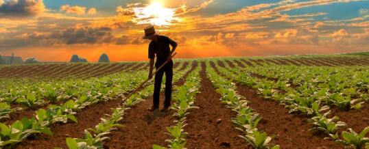 Coltivare tabacco nel 2013: perché la ricerca e con quali obiettivi