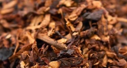 Tabacco Burley