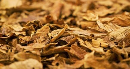 Tabacco Virginia